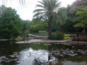 Brisbane City Botanic Gardens - Wagga Wagga Accommodation