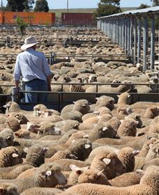 Livestock Marketing Centre - Wagga Wagga Accommodation